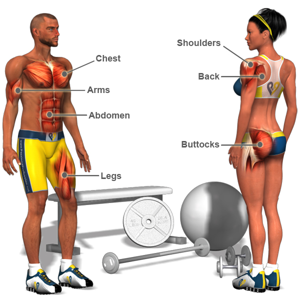 Muscles are great fat-burners – so get pumping!