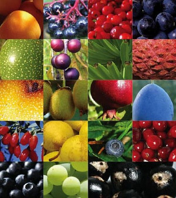 Antioxidants – What They Are & How They Work
