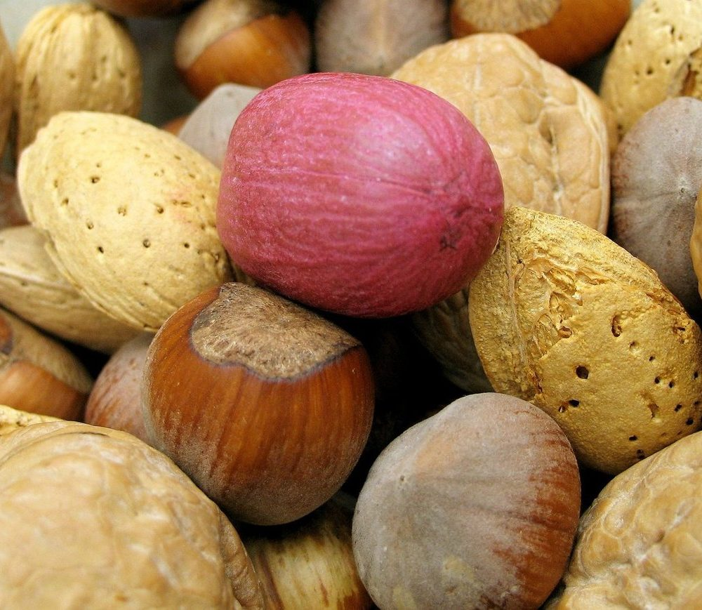 The joy of nuts!